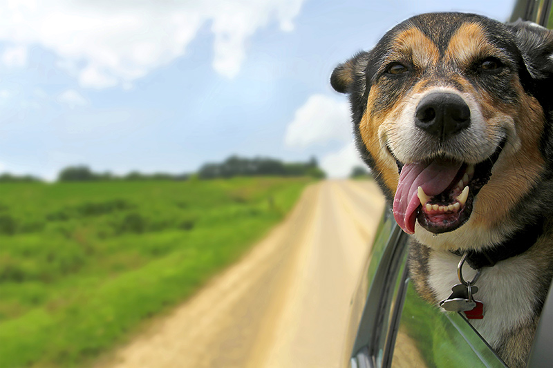Travel Apps for The Best Road Trip Ever