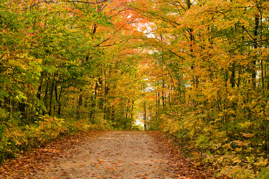Taking great fall foliage photos with your smartphone