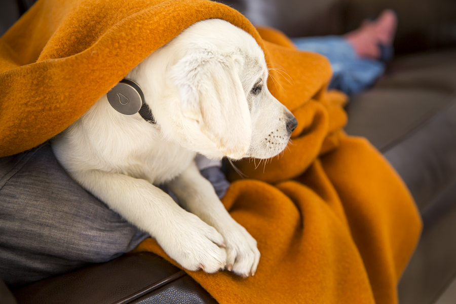 Wearables For All: A Fitness Tracker for Dogs